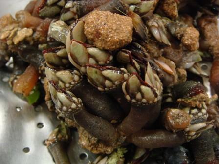 Seafood Laocook