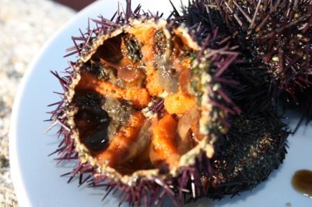 urchin-2